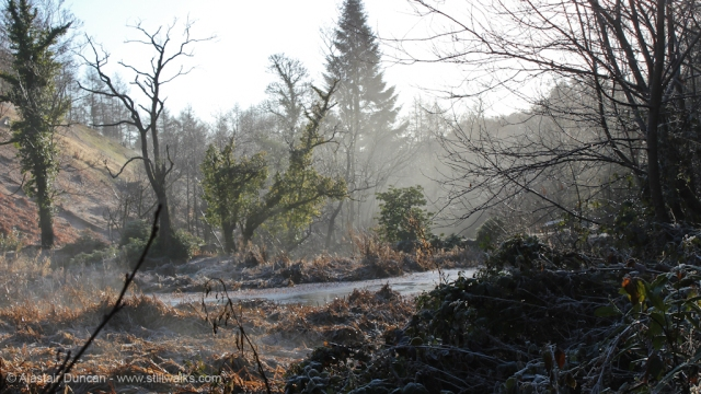Pennlergaer Woods in Winter
