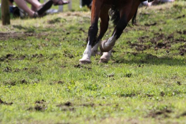 Hooves 2
