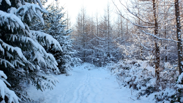 from Forest Walk - Winter
