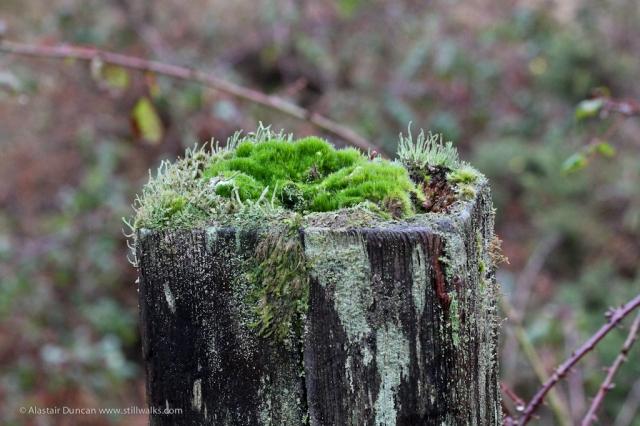 fence post garden