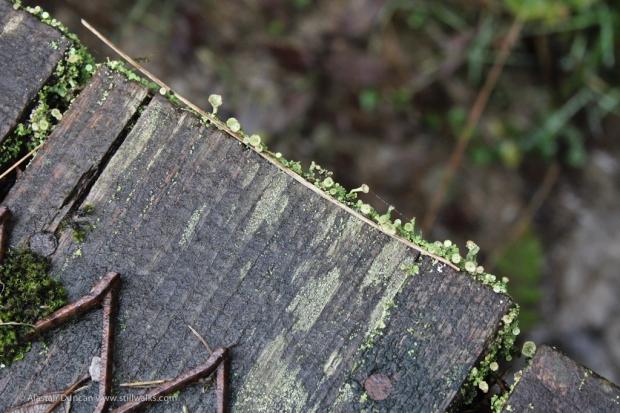 Moss Collectors
