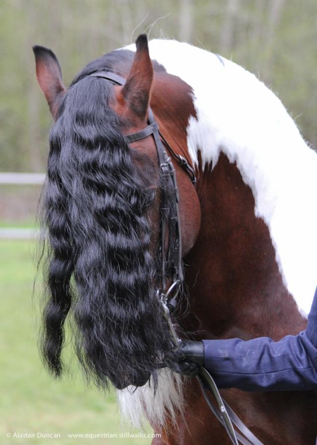 Horse Hair-do