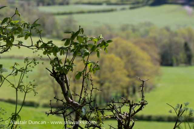 Carmarthenshire Countryside