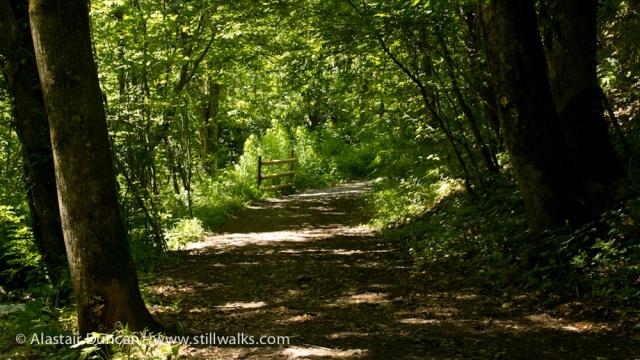 Pont Felin Gât Woods