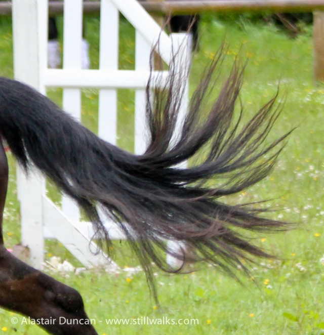 Dark horse tail