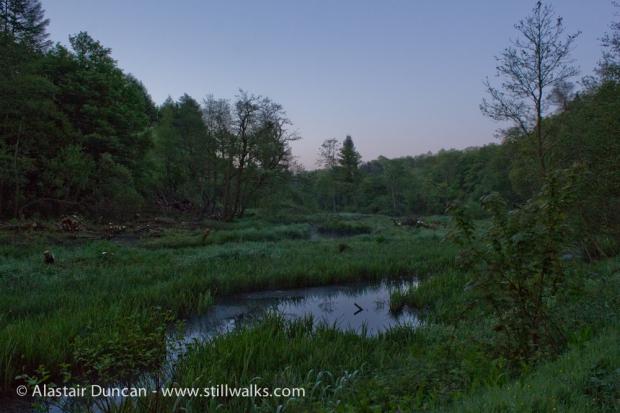 Pre-dawn, Penllergaer Woods