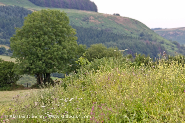 Cimla Landscape