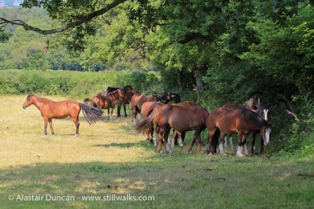 Parc-Le-Breos Horses