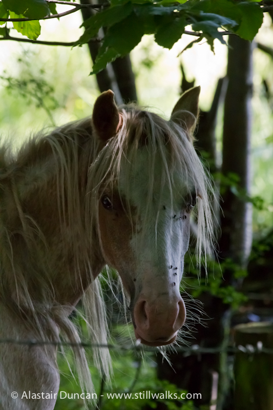 Pony in the Woods