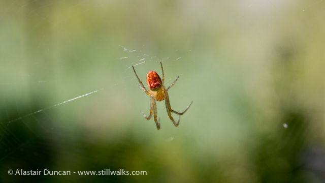 Old Railway Walk-Spider