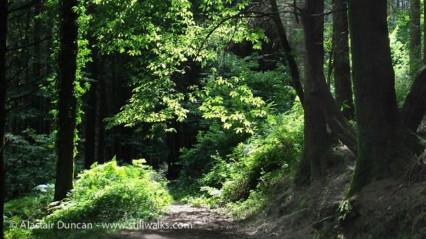 Fforest Forest 1