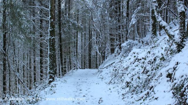 Forest Walk 1
