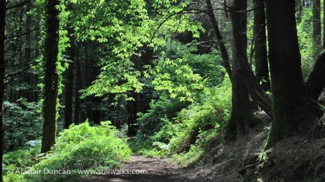 Fforest Forest 2