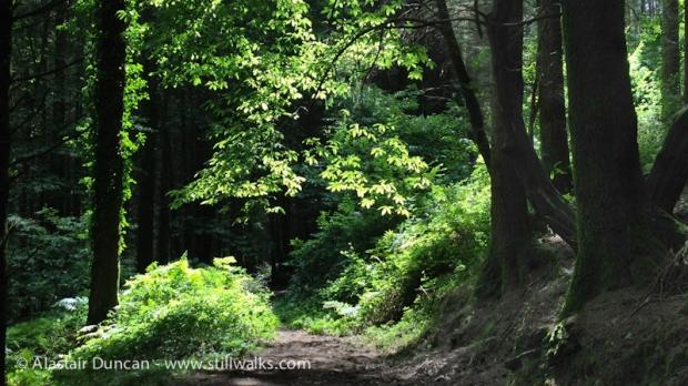 Fforest Forest-3