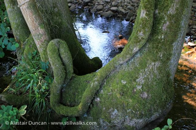Morlais Riverbank