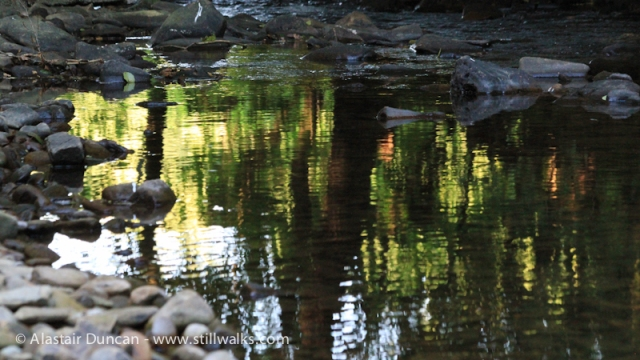 Woodland Reflections