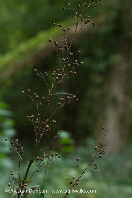 Cwm Green Seed Heads