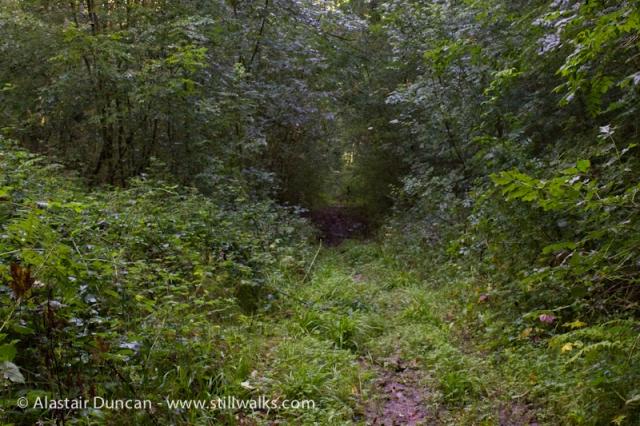 Cwm Green Footpath-1