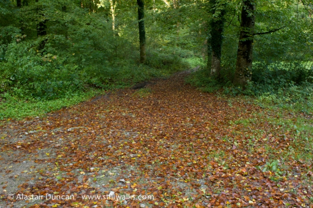 Cwm Green Footpath-4