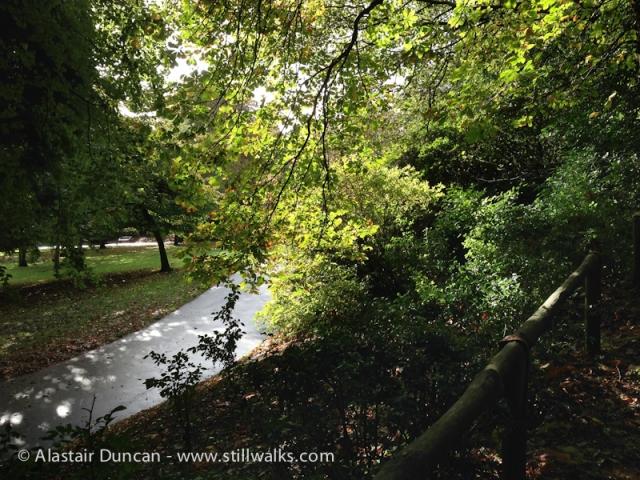 Cwmdonkin trees