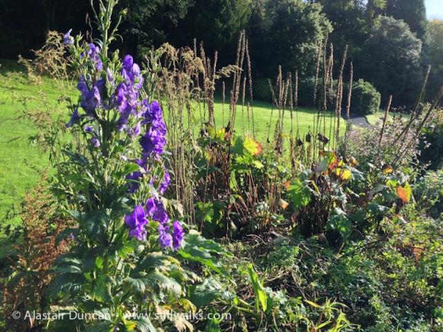 Cwmdonkin Park Flowers