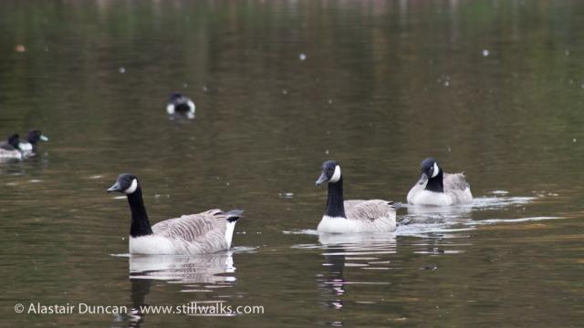 Gnoll Park Lake 1