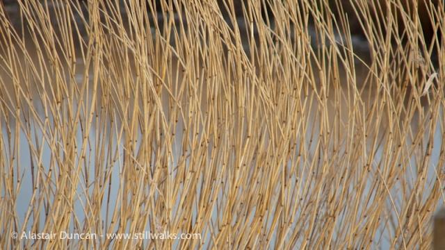 Marshes AtT