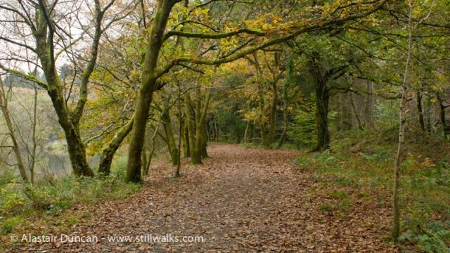 Moss Wood Walk 1