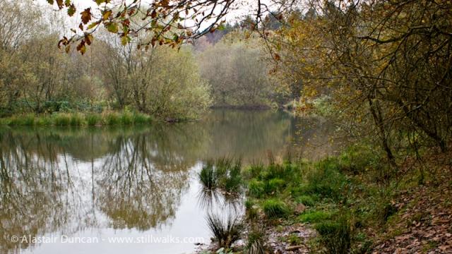 Moss Wood Walk 2