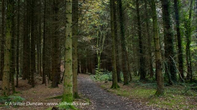 Moss Wood Walk 3