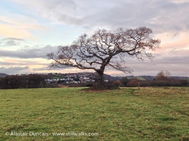 Pontarddulais Tree