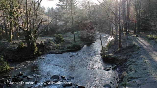 Penllergaer Woods
