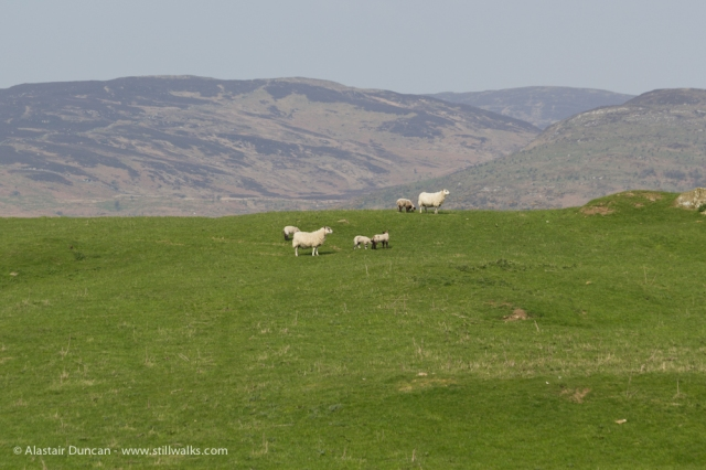 Galloway scenery