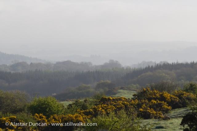 morning mist