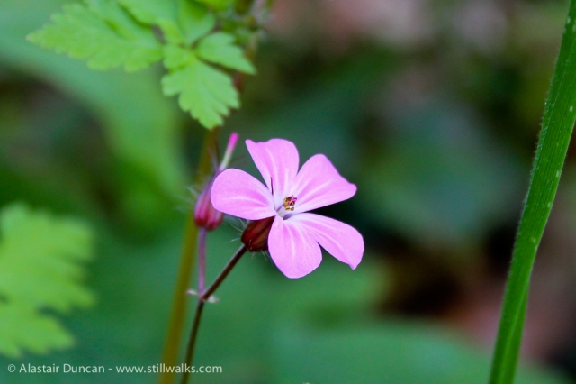 Pembrey Wild Flowers