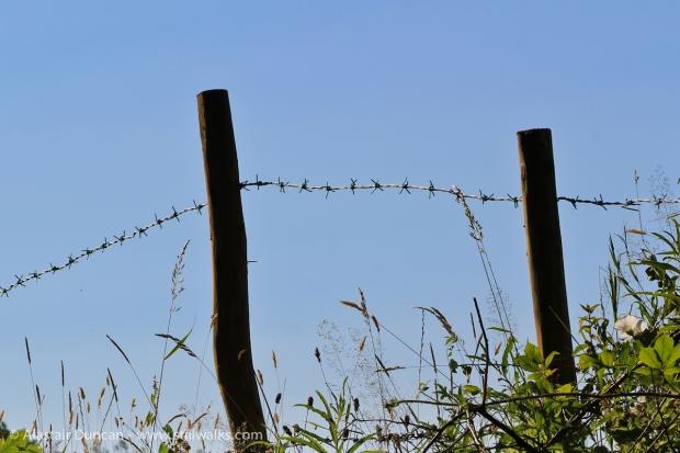 Woodland Fence