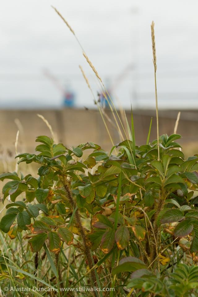 Swansea Bay Cranes