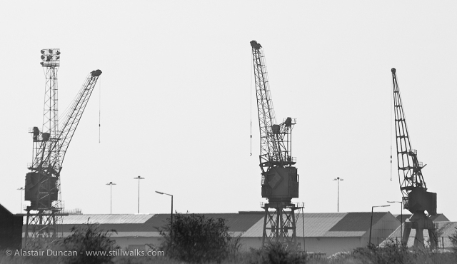 SA1 cranes-6