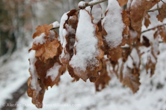 leaves in winter