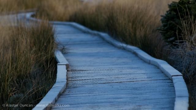 frosty boardwalk