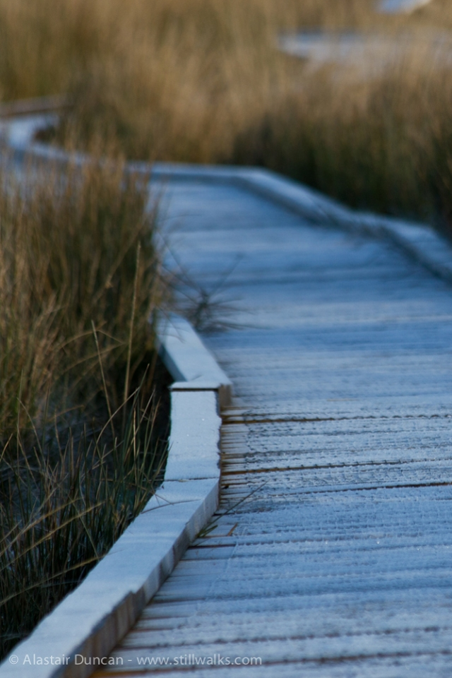 frosty boardwalk