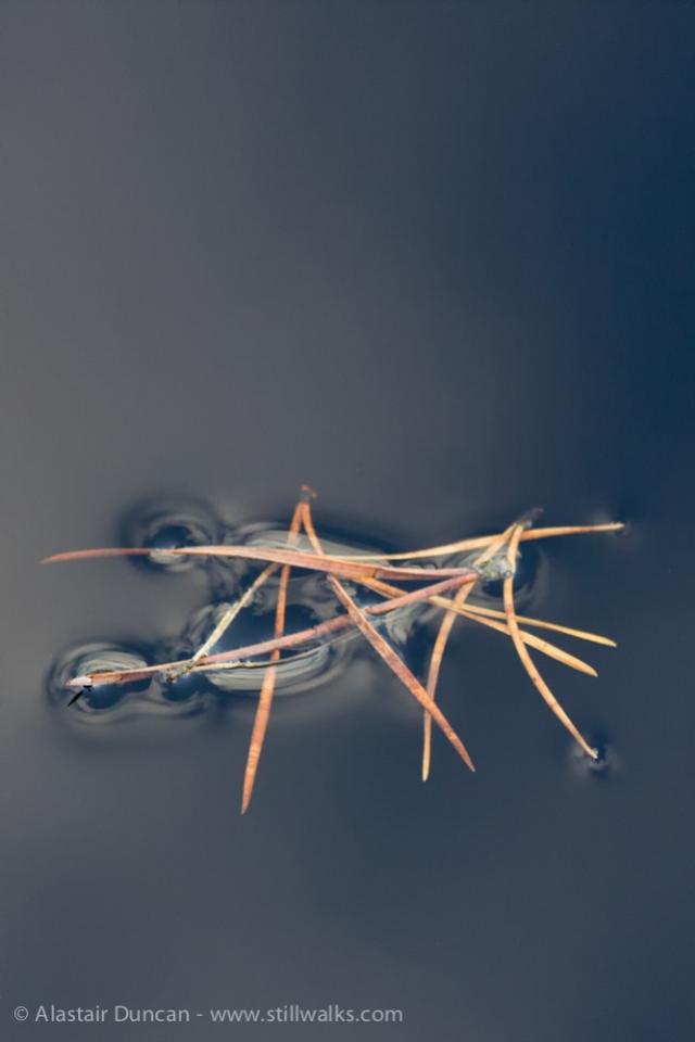 floating needles