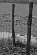 monochrome fence posts
