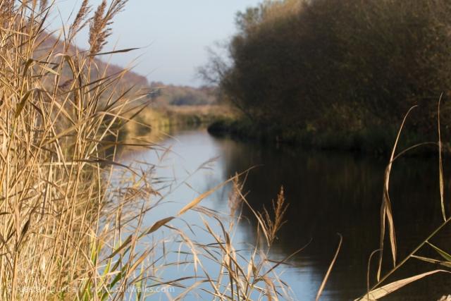 Tennant Canal Swansea
