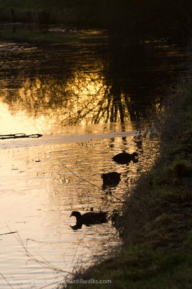 Lake Sunset-7