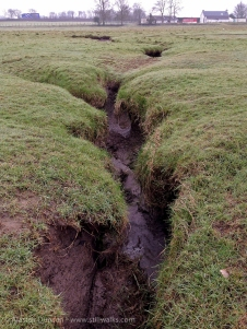 marsh gullies