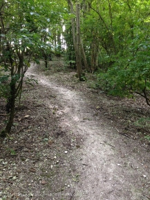 chalky woodland path