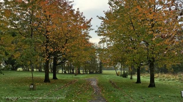 Coedbach Park