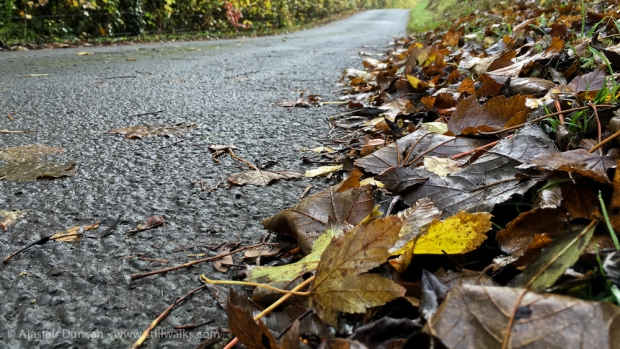leaves and road