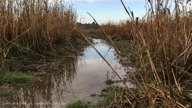 marshy footpath